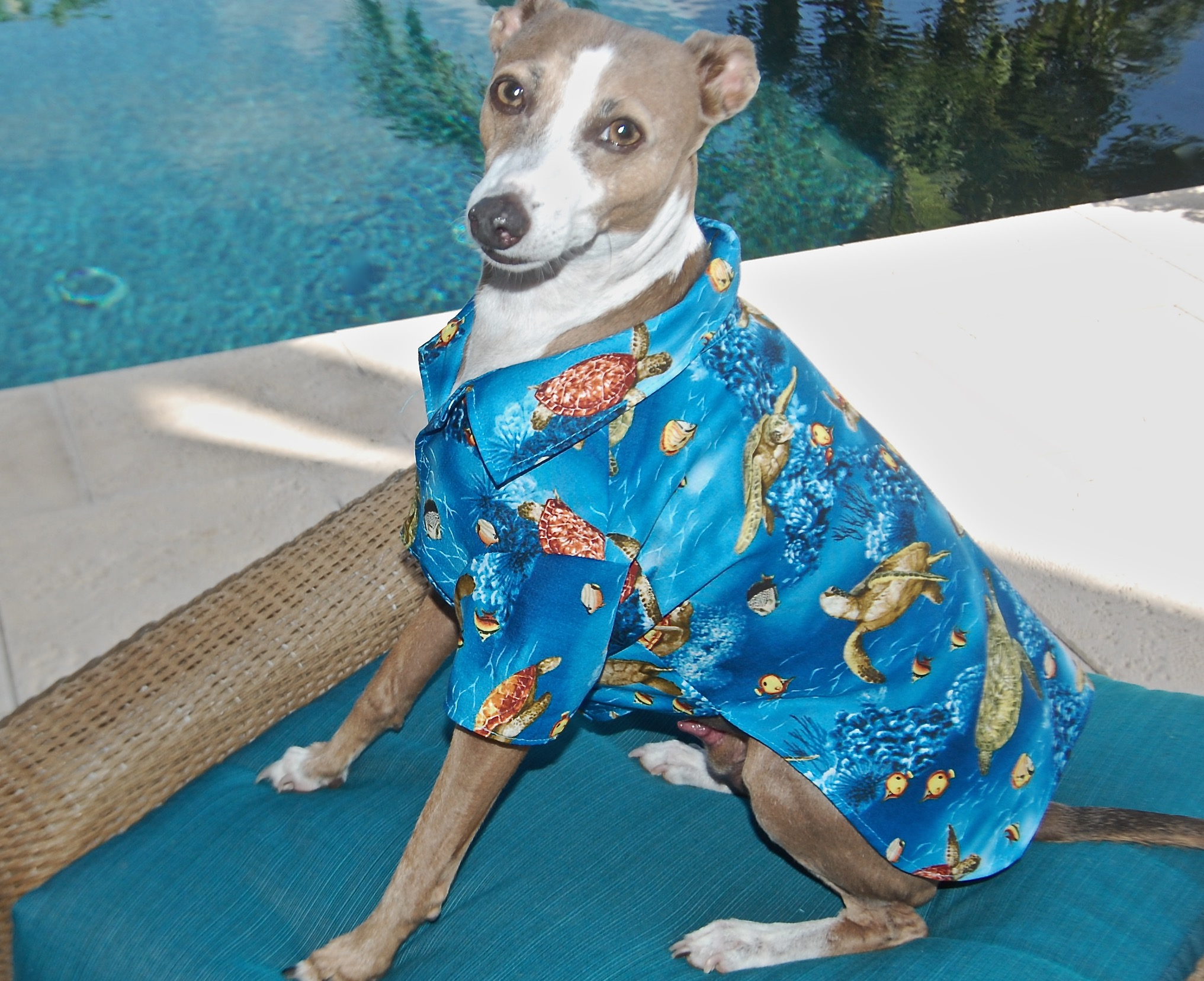New Dog Shirts and Fancy Dog Dresses for Your Cool and Stylish Dog ...